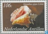shells (Met landsnaam)