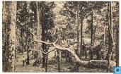 Mayumbe - Village en plene forêt