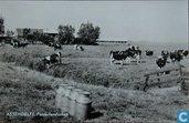 Assendelft - Het polderlandschap