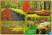 Keukenhof - Holland in bloementooi