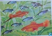 Voor het Kind-Vissen: zebra visjes