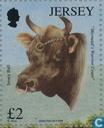 Confentie Jersey runderen