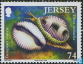 Créatures des mollusques-mer