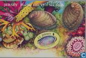 Shellfish-Sea Creatures