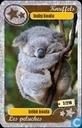 silver star : baby koala