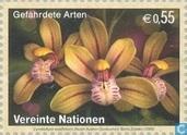 Orchideën Flora|Bloemen|Orchideën