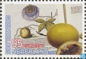 Boundless Netherlands-Brazil
